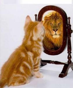 Gato-en-el-espejo